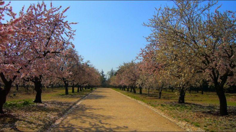 Fotos de primavera blog de turismo rural for Piso quinta de los molinos