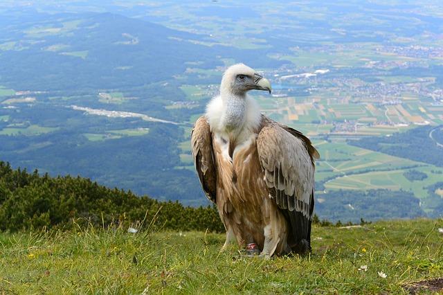 Los mejores lugares para el turismo ornitológico en España
