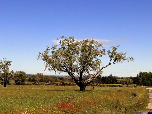 Planes para visitar la comarca de Aliste