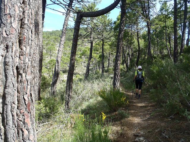 Rutas de senderismo en familia por Albacete