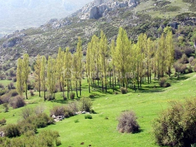 Muebles De Baño Ubeda:paraje de sierra mágina arboleda del parque de sierra mágina